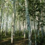 Экологический аудит: этапы